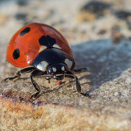 Ladybird On Concrete by Scott Lyons