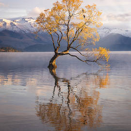 Lake Wanaka Tree by Photography by KO