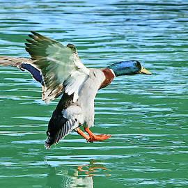 Landing on Water by Shoal Hollingsworth
