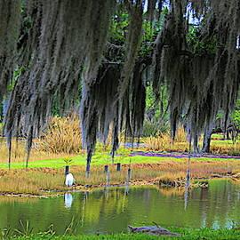 Landscape Avery Island Louisiana  by Chuck Kuhn