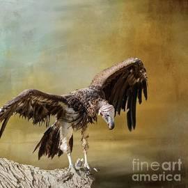 Lappet-Faced Vulture by Eva Lechner