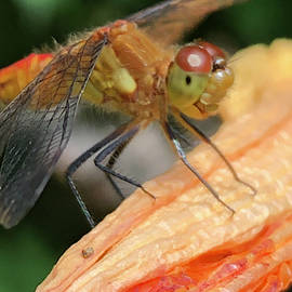 Larry The Dragonfly by Cindy Greenstein
