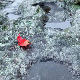 Last to Fall by Dan Carmichael