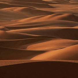 Late Afternoon Light On The Sand Dunes by Mint Images - Art Wolfe
