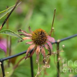 Late Summer - Flower Photography by Miriam Danar