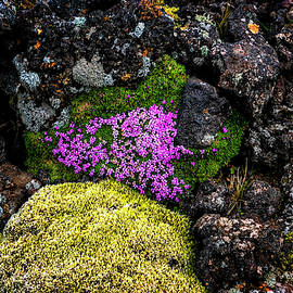 Lava Rocks And Flowers by Tom Singleton