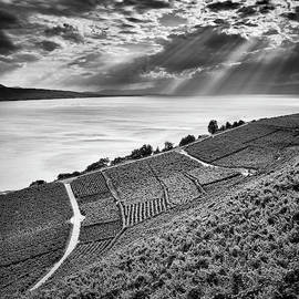 Lavaux vineyards. Leman Lake. Alps. Switzerland. BW by Guido Montanes Castillo