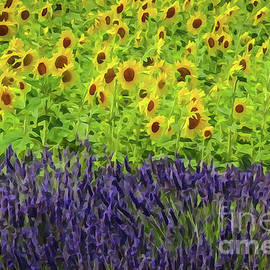 Lavender and Sunflowers by Bob Lentz