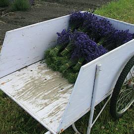 Lavender Farm Harvest by Leslie Struxness