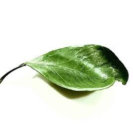 Leaf Alone by Alida M Haslett