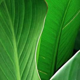 Leaf Abstract 29 by Sarah Loft