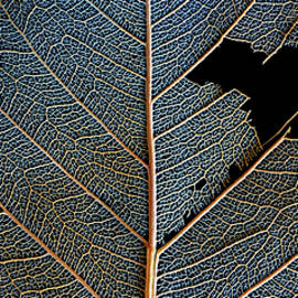 Leaf Macro by Christopher Johnson