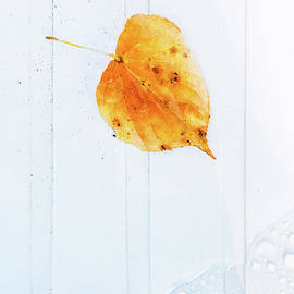 Leaf On White With Water by Silvia Ganora