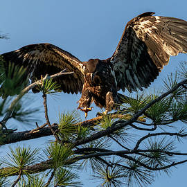 Learning to Fly by Randy Robbins