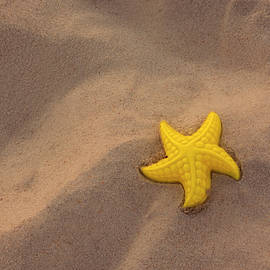Left Behind - Starfish on the Beach by Mitch Spence