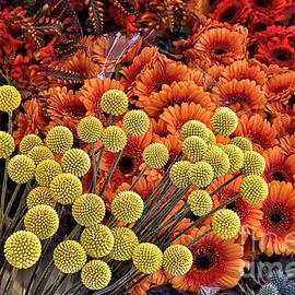 Leiden Flower Market by Norman Gabitzsch