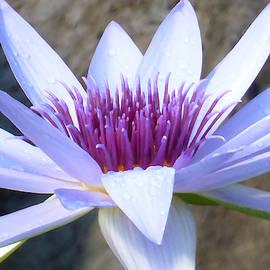 Leilani Lotus by Sumedha Barna