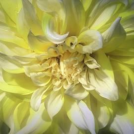 Lemon Meringue 2 by Donna Kennedy