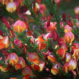 Lena Scotch Broom - Painterly by Donna Kennedy