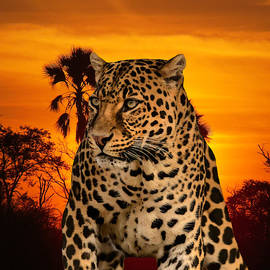 Leopard and Sunset by Erika Kaisersot