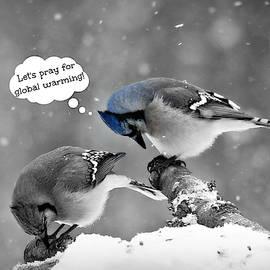 Blue Jays  Let's Pray for Global Warming by Marilyn DeBlock