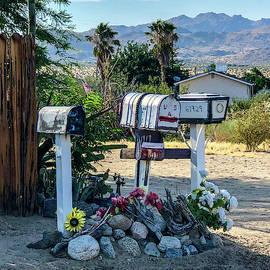 Letters from Joshua Tree by Debra Farrey