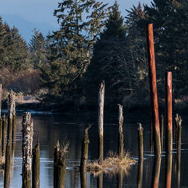 Lewis And Clark River Pilings by Robert Potts