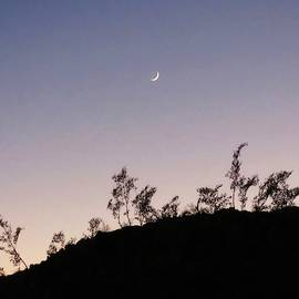 Libra Twilight Crescent by Judy Kennedy
