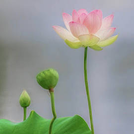Life Of The Lotus by Kevin Lane
