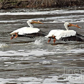 Lift Off by Kathy M Krause