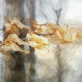 Light Leaf Beauty by Terry Davis