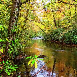 Light on the Stream II by Debra and Dave Vanderlaan