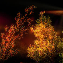 Lights in the sky by Micah Offman