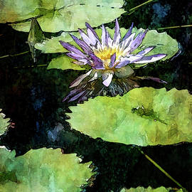 Lily Pads And Purple Lotus 2981 Idp_2 by Steven Ward