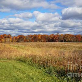 Line of Autumnal Grace by Rachel Cohen