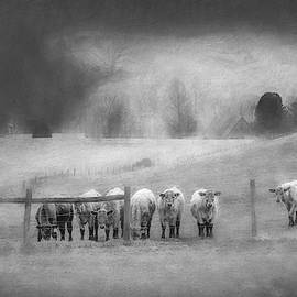 Line Up Boys Black And White by Jim Love