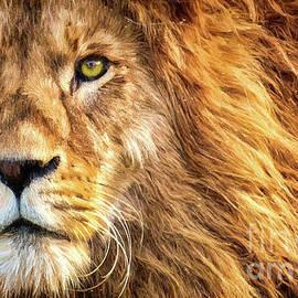 Lion Face by Tina LeCour