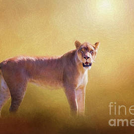 Lioness In The Golden Sun by Sharon McConnell