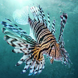 Lionfish by Weston Westmoreland