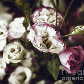 Lisianthus Vintage by Flo Photography