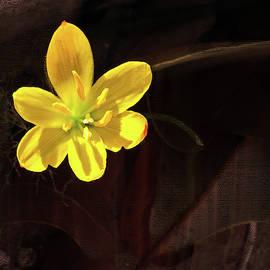 Little Cuban Flower Digital Painting by Gene Norris