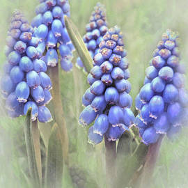 Little Grapes Of Spring 2 by Kim Tran
