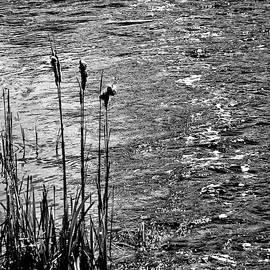 Little Stream in BW by Lyuba Filatova