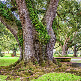 Live Oak Giant by Steve Harrington