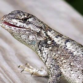 Lizzy Lizard by Angelcia Wright