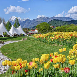 Ljubljana Arboretum Tulips by Norman Gabitzsch