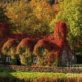 Llanrwst Tea Room Autumn by Adrian Evans