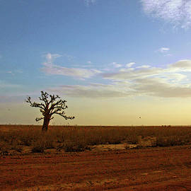Lone Baobab Tree by Mark Duehmig