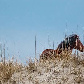 Lone Stallion by Pete Federico