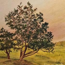 Lone Texas Junipers at Dawn by Barbara Moak